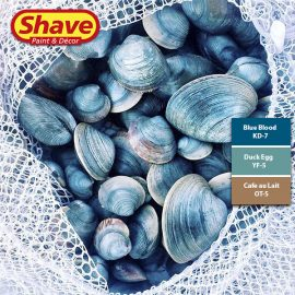 Colour Inspiration Shell